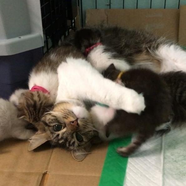 猫の複数飼い(多頭飼い)