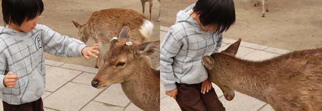 傍若無人な動物たちの画像を貼るトピ