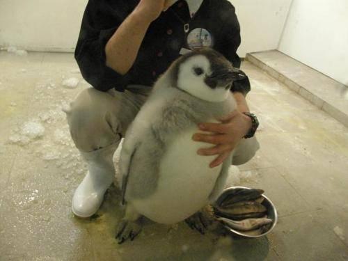 **ガルちゃん動物園**