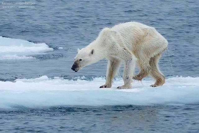 海洋公園の島でヤギが増えすぎ害獣に…野犬のディンゴを島に放ち退治させる計画「時限活性化毒を埋め込んであり、時が来ればこのディンゴらも死ぬことになっている」