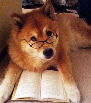 本をあまり読まない人でも読みやすい本