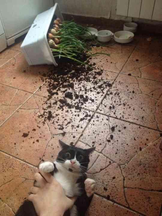 ネコを飼うのを諦めさせて下さい