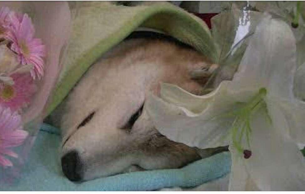 ACジャパンのCMに動物殺処分を考えさせられる「命を飼う覚悟、ありますか。」