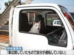思わず二度見!パトカーで連行されるワンコが哀愁漂いすぎ 「お前は一体何をしたんだ」