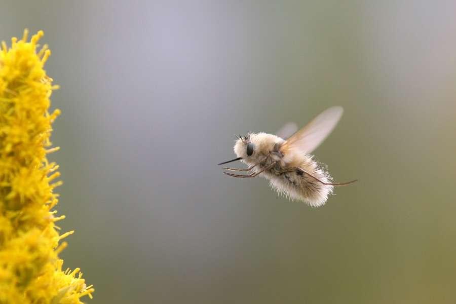 ゴキブリの底力 時速320kmで走り頭がもげても死なない