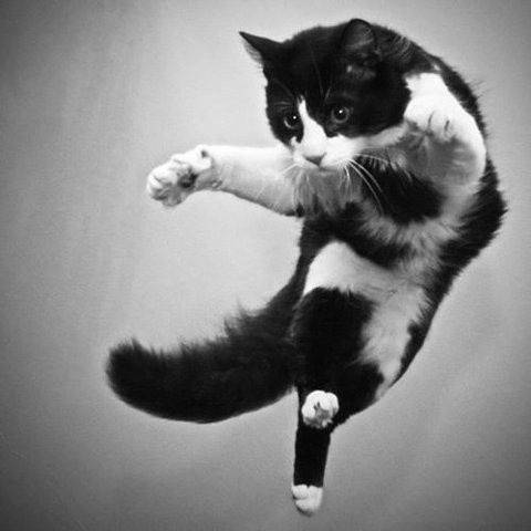 【急募!!】カッコイイ猫科動物の画像