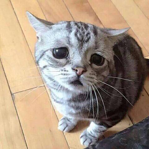 家の中に動物を連れて来られても平気ですか?