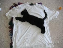 「この写真の中に猫がいます」 周囲と完全に同化したステルス猫写真が話題に