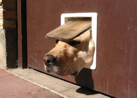 私の愛犬のカワイイところ!