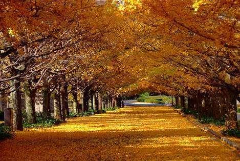 秋が好きな人