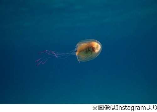 【 金魚】可愛い、綺麗なお魚画像ください~【熱帯魚 】
