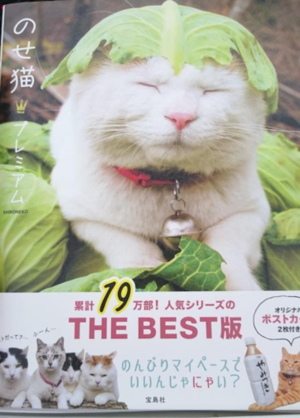 ネコネコ雑談トピ
