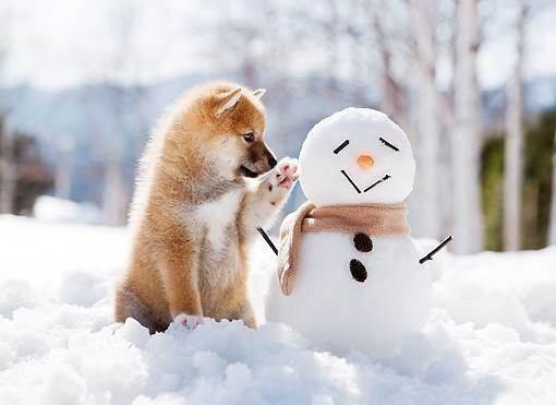 冬といえば?