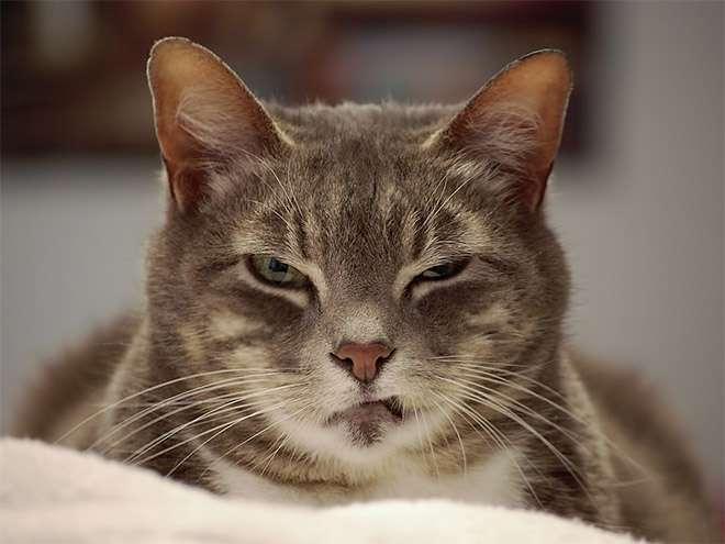 怒ってる画像ください