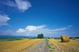 田舎に生まれて良かったですか?