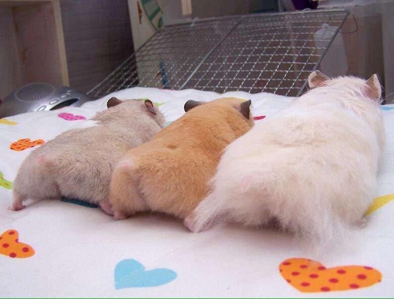 動物のお尻が集まるトピ