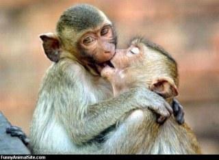 可愛いキスの画像を貼っていくトピ