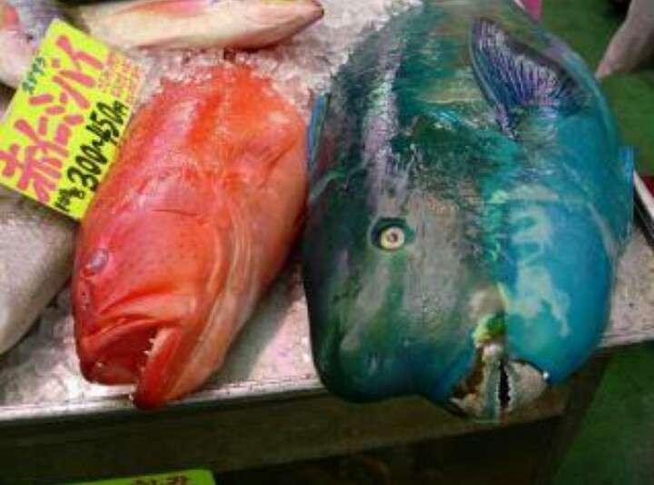 「これから食べます!」釣り人がTwitterユーザーの指摘で九死に一生