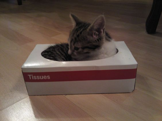 何を考えているのかニャ? 仰向けでティッシュケースに収まった子猫が可愛いと話題に