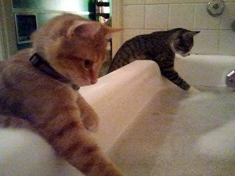 お風呂に入るのが面倒な人たちが互いに協力しあってお風呂に入るように仕向けるトピ