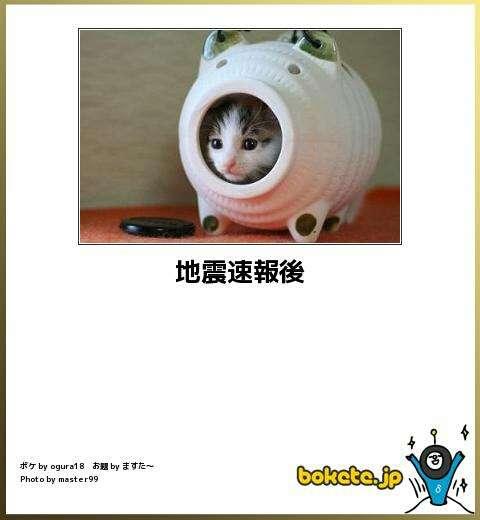 ペットの地震対策