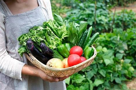 家庭菜園について語ろう!