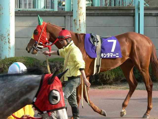 「センテンスプリング」が馬名に 「ベッキー」との対決あるか