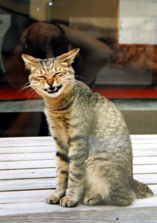 野良猫対策を教えてください!
