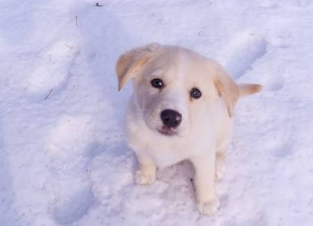 雪と動物の画像を集めよう