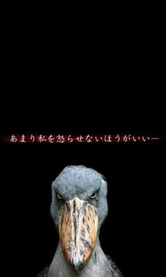 怖かわいい☆ハシビロコウ愛好会