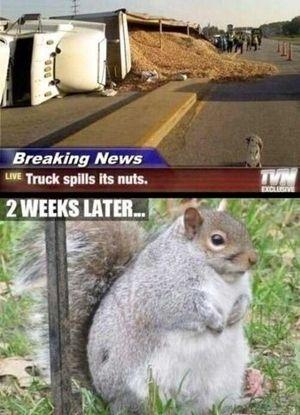 """""""肥満""""アライグマ、太り過ぎで自力脱出できず…ドーナツ屋のゴミ箱から救出!"""