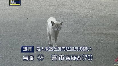 笑っちゃう猫動画