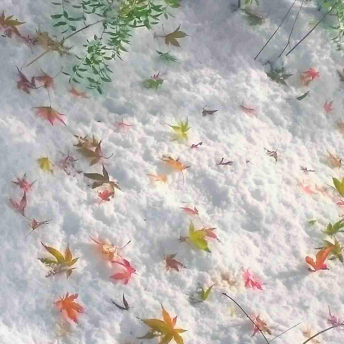 紅葉の画像を貼るトピ
