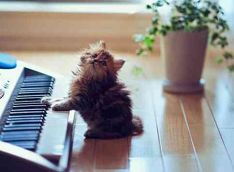 ピアノ経験者あるある♪