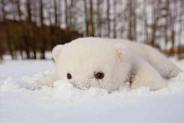 【画像】冬を感じるトピ