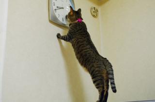 ガルちゃん猫カフェ9号店開店しました♪