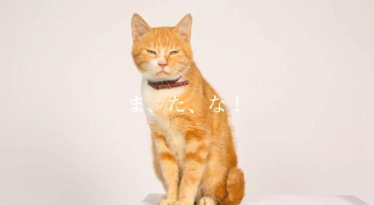 【実況・感想】ドクターX〜外科医・大門未知子〜   #4