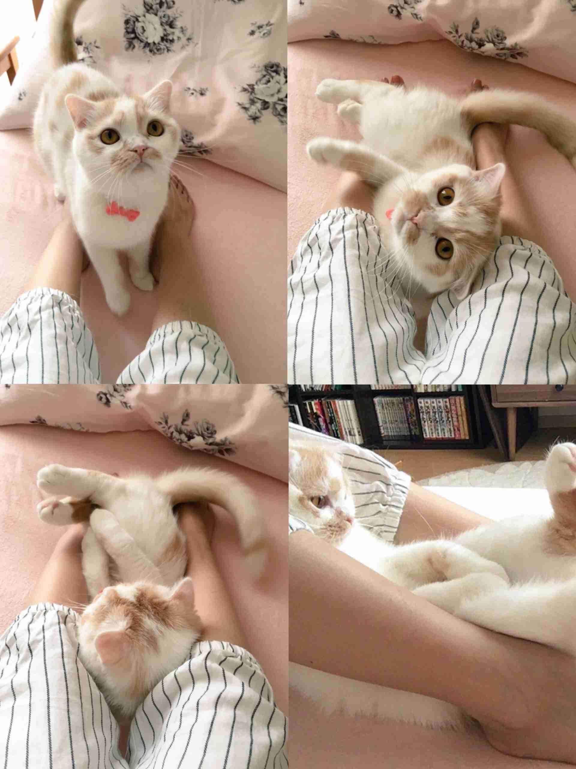「膝の上座らして」 直立姿勢でじーっと見つめてくる猫さんがかわいい