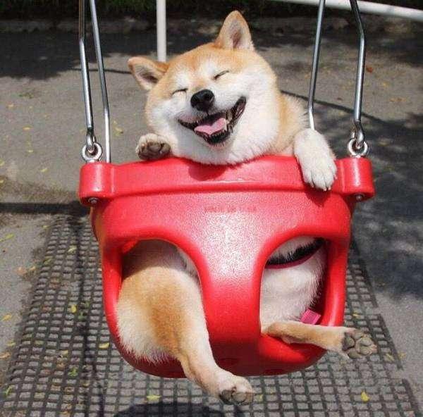 幸せな気分になれる画像を貼るトピ
