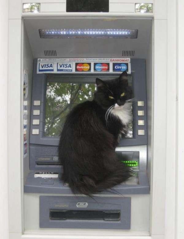 ATMがしゃべったら言いそうな事
