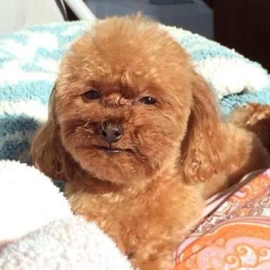 """佐々木希の愛犬""""エルマ""""が雑誌表紙に!2ショットに「癒された」「可愛くて悶絶」の声続々"""