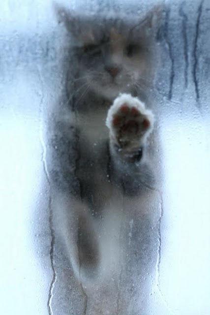 冬の小さい幸せをかみしめるトピ