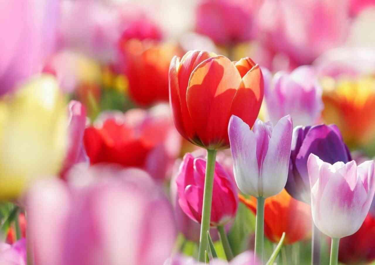 好きな花の花言葉