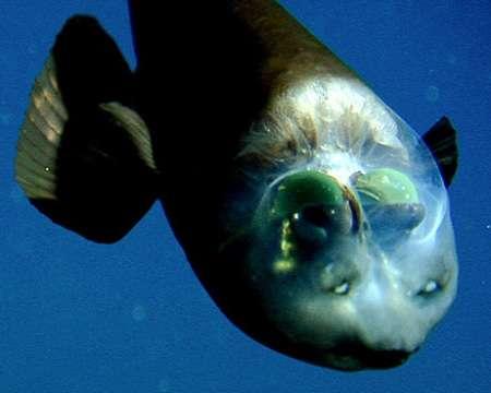 深海魚を語ろう!