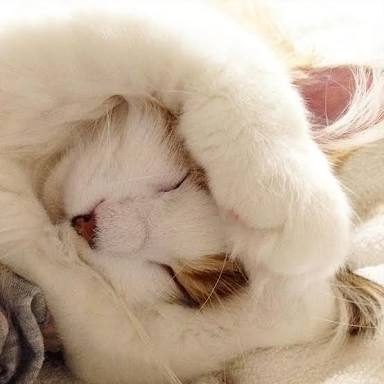 NHK「ダーウィンが来た!」で猫特集!「岩合光昭の世界ネコ歩き」と初コラボも