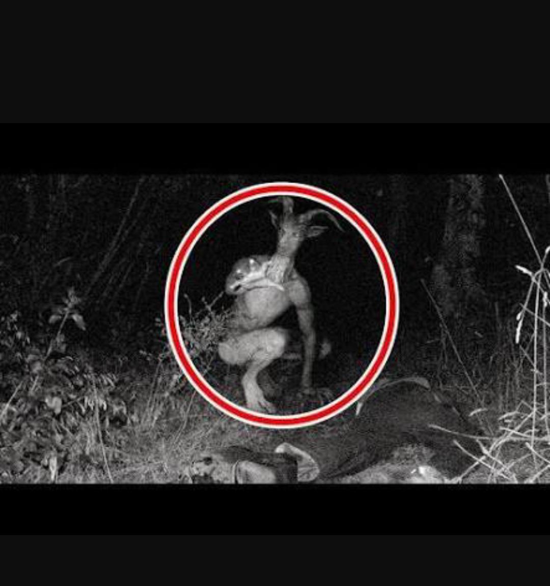 【閲覧注意?】野生動物観察のため森にカメラを仕掛けたところ、予想外のモノが撮影され研究者困惑