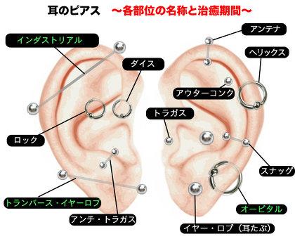 英国人の100人に1人、日本人の50人に1人は耳の付け根に「小さな穴」がある!