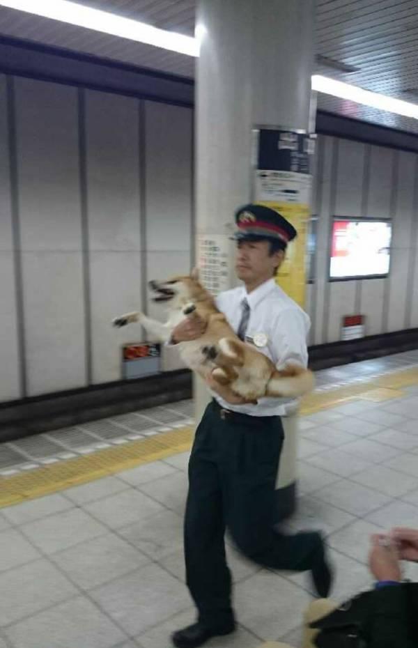 雑種犬の魅力 U^ェ^U