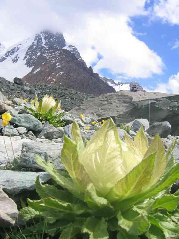 高嶺の花の人の特徴