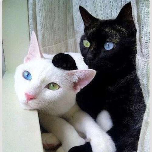 どんな柄の猫ちゃんが好きですか?